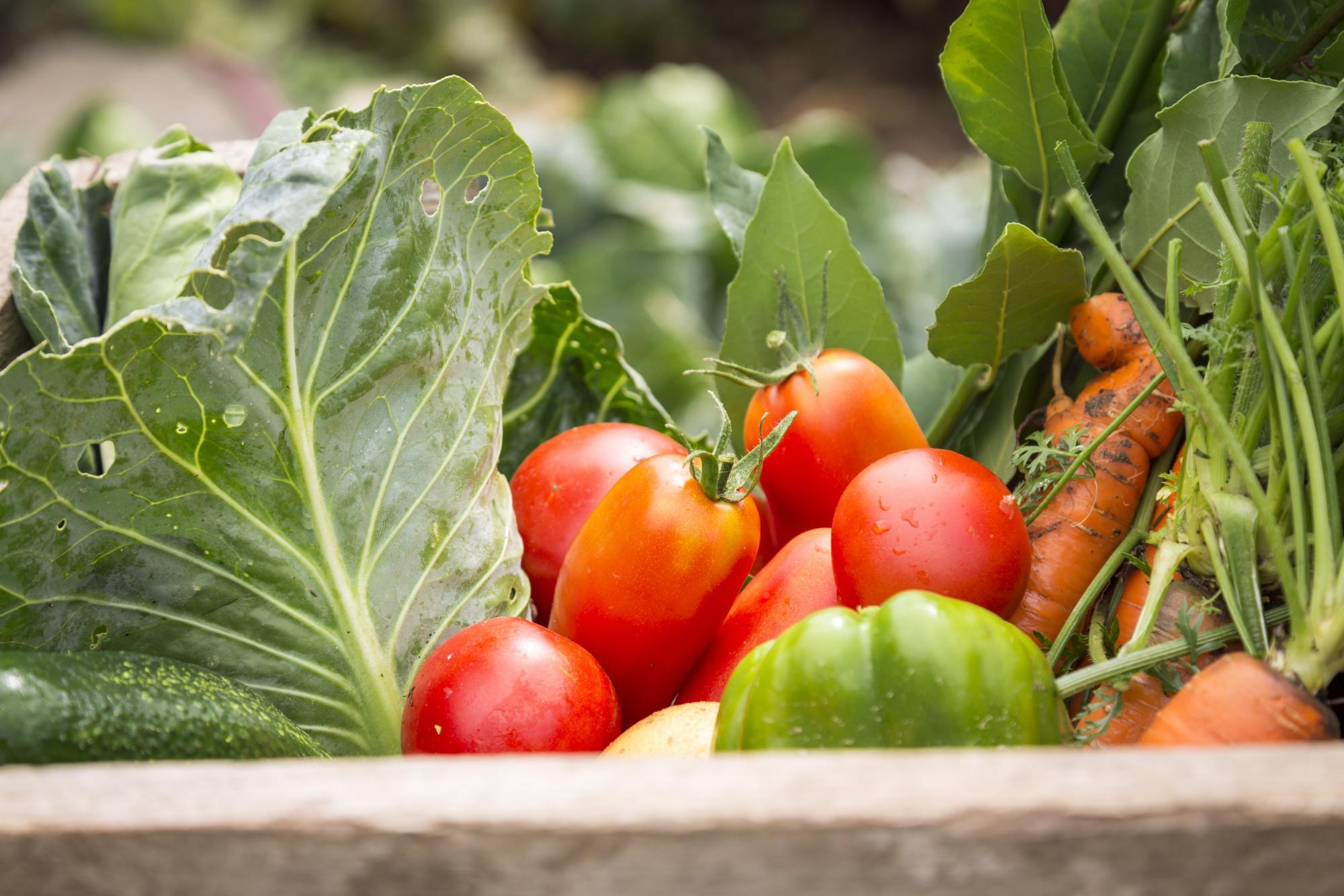 Sizde Organik Tarım Yapın